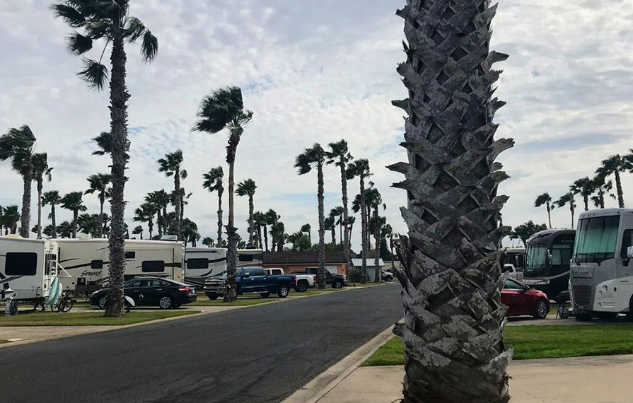 Manicured grounds at resort with palm trees and RVs lined up along sides