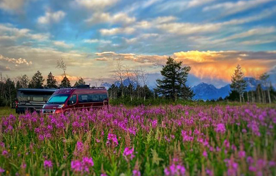 Two Travatos sitting in field of flowers with colorful sunset above them