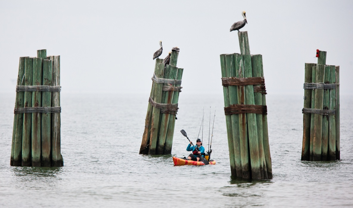 Kathy kayaking through remains of an old pier that pelicans are sitting on top of.