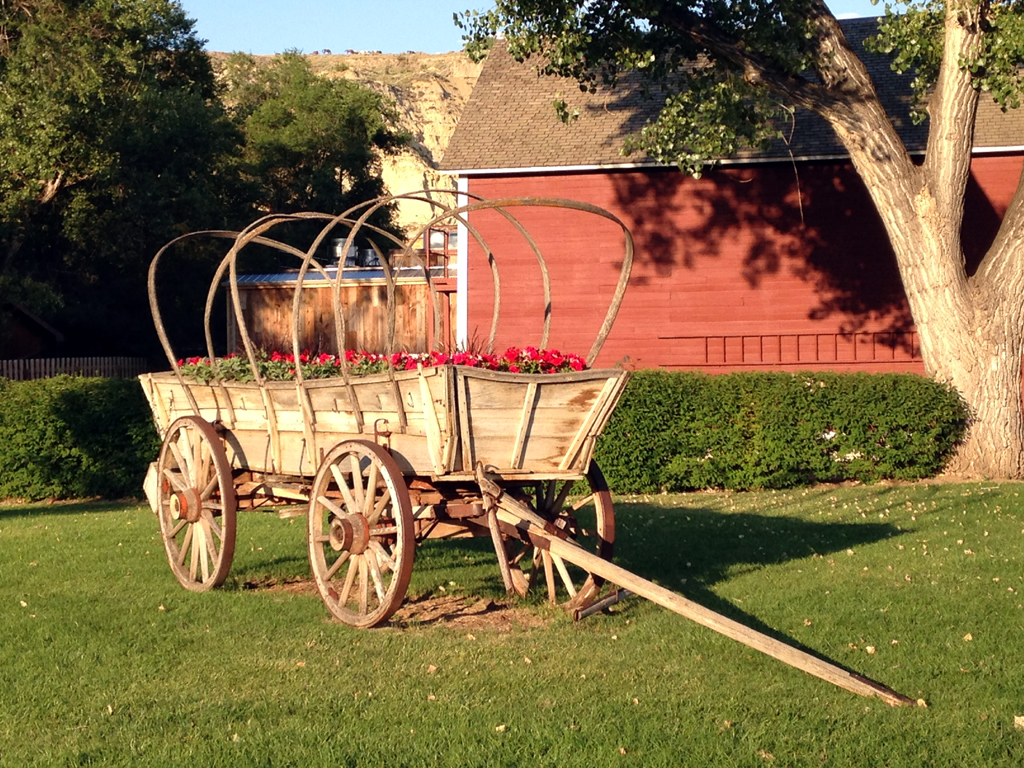 Old wagon with flowers planted on grassy yard.