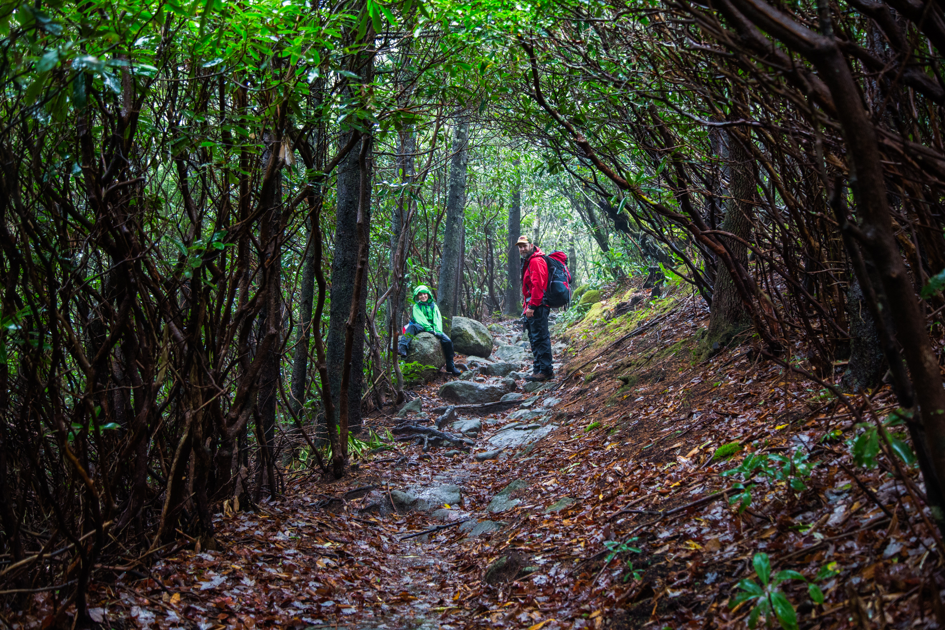 Man and child with hiking gear on path through rhododendron tunnels.