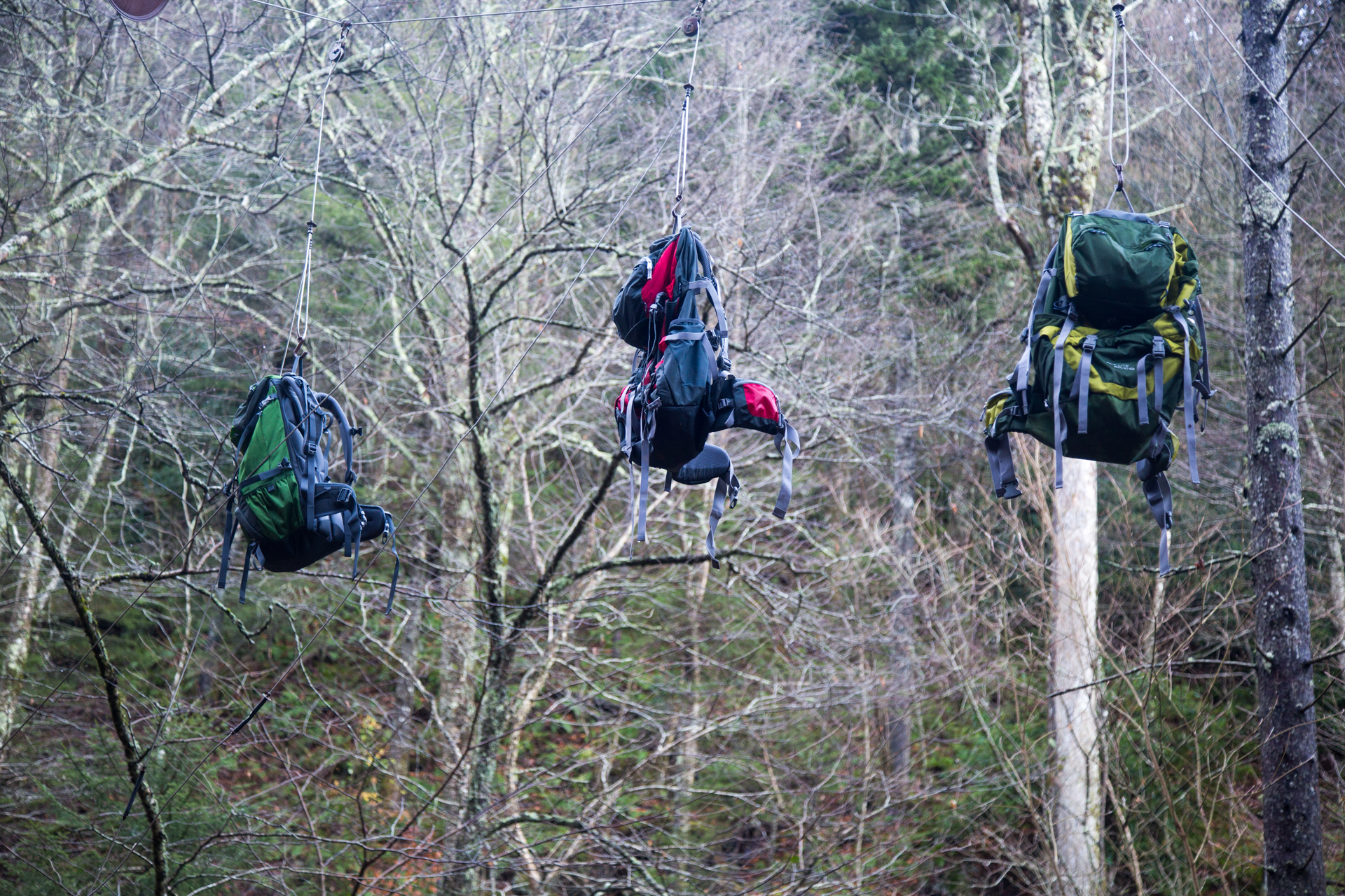 Three backpacks hanging from the trees.