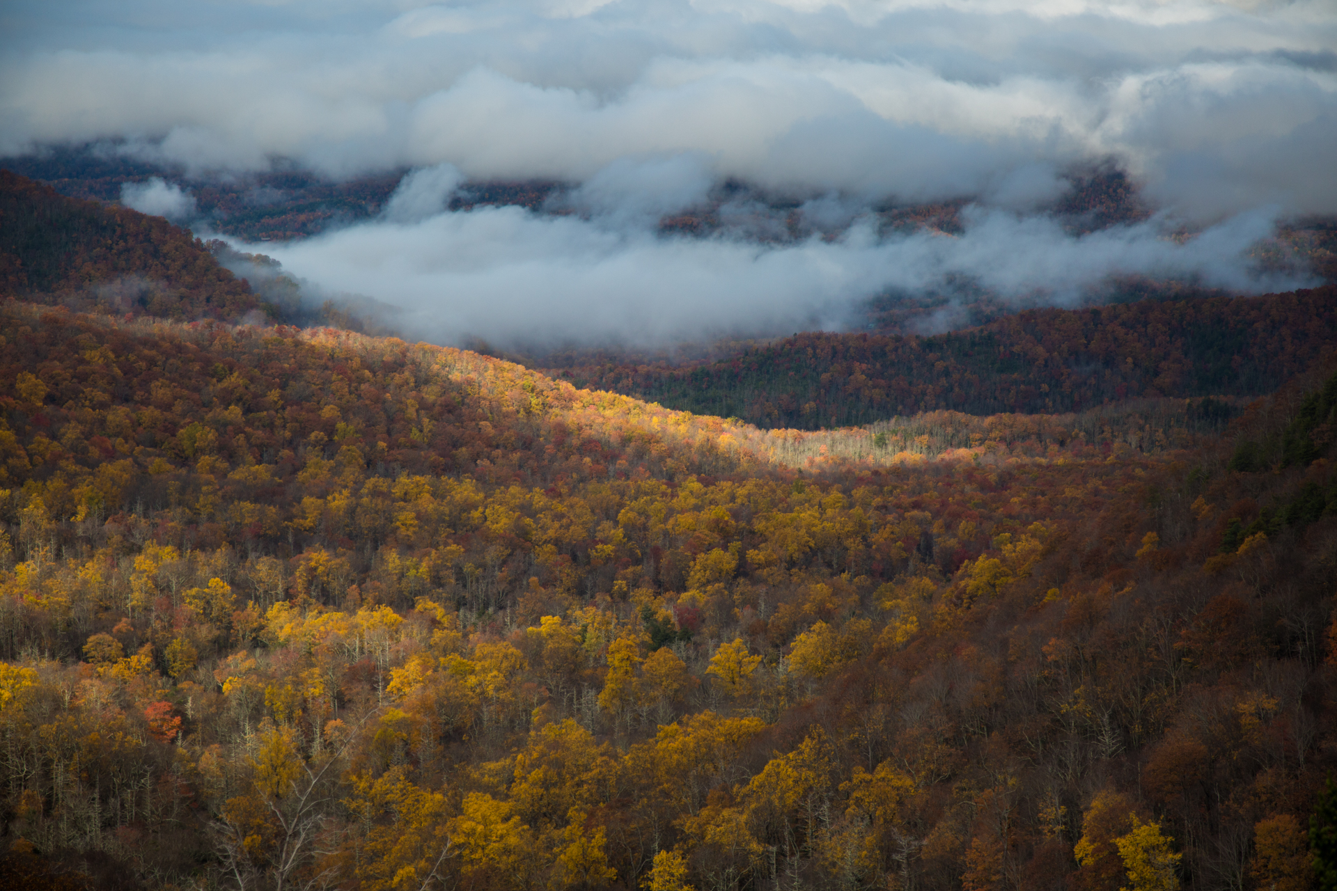 Trees changing color covering hills and valley under low hanging clouds.