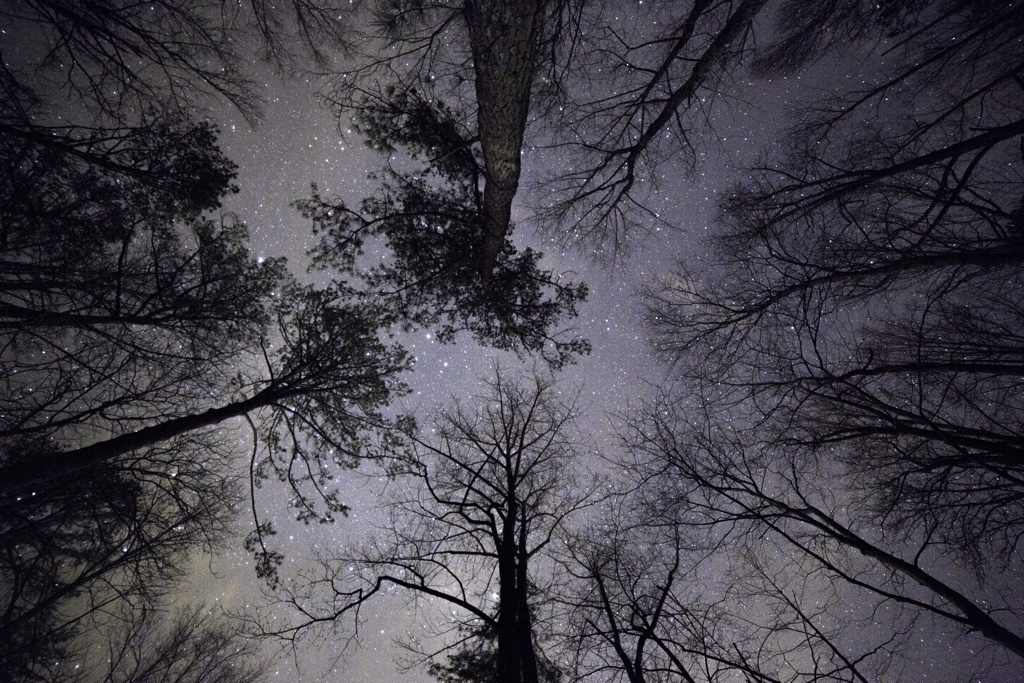 Looking up at the stars under a canopy of trees.