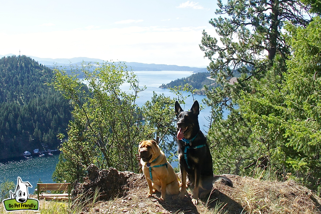 Ty and Buster sitting on the edge of a steep hillside with river running below.