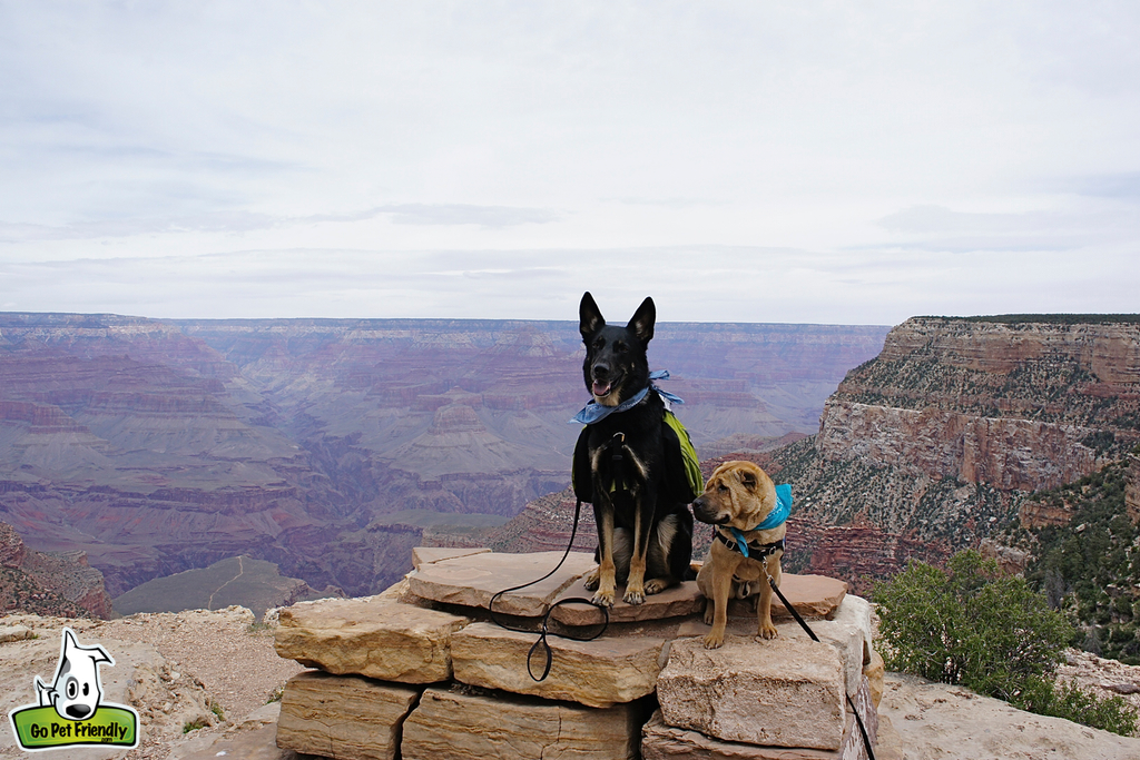 Ty and Buster sitting on rocks with Grand Canyon behind them.