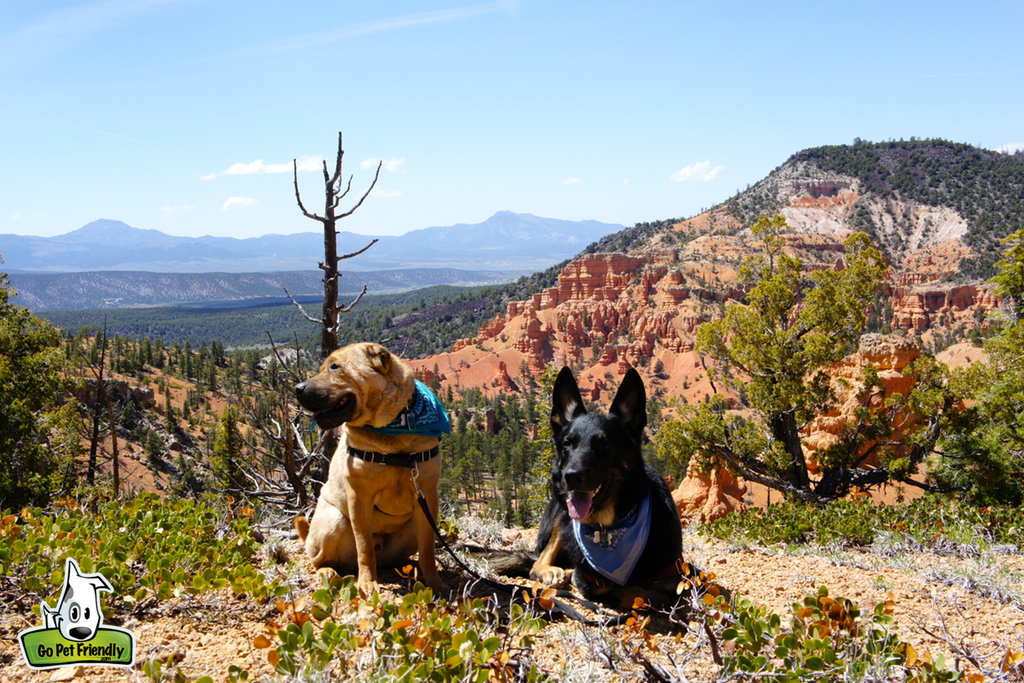Two dogs sitting at the edge of a hillside with rough and rocky landscape surrounding.