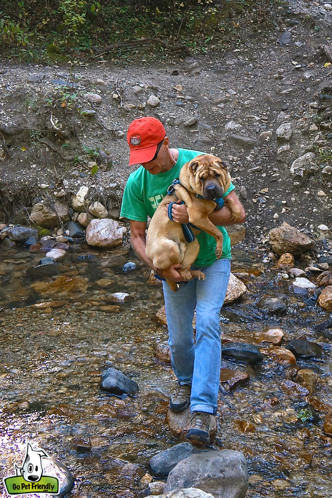 Dog being carried across a shallow stream.