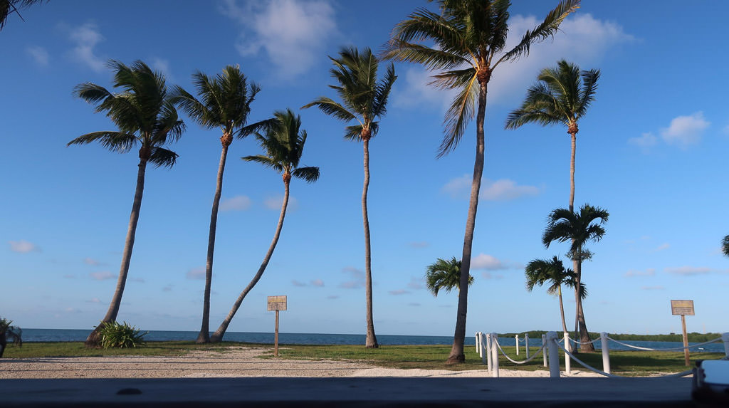 Palm trees along the coast.