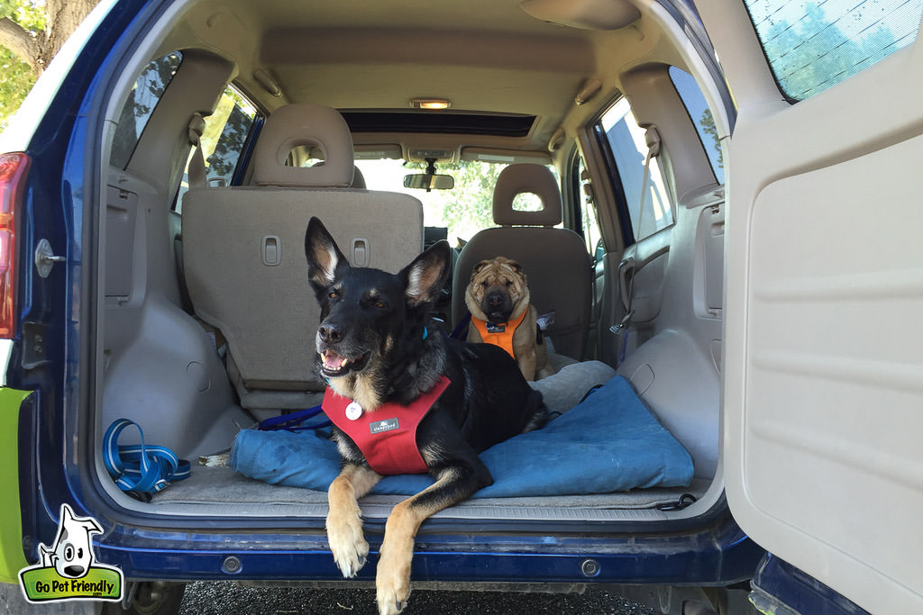 Two dogs sitting in the back of a van with the door open