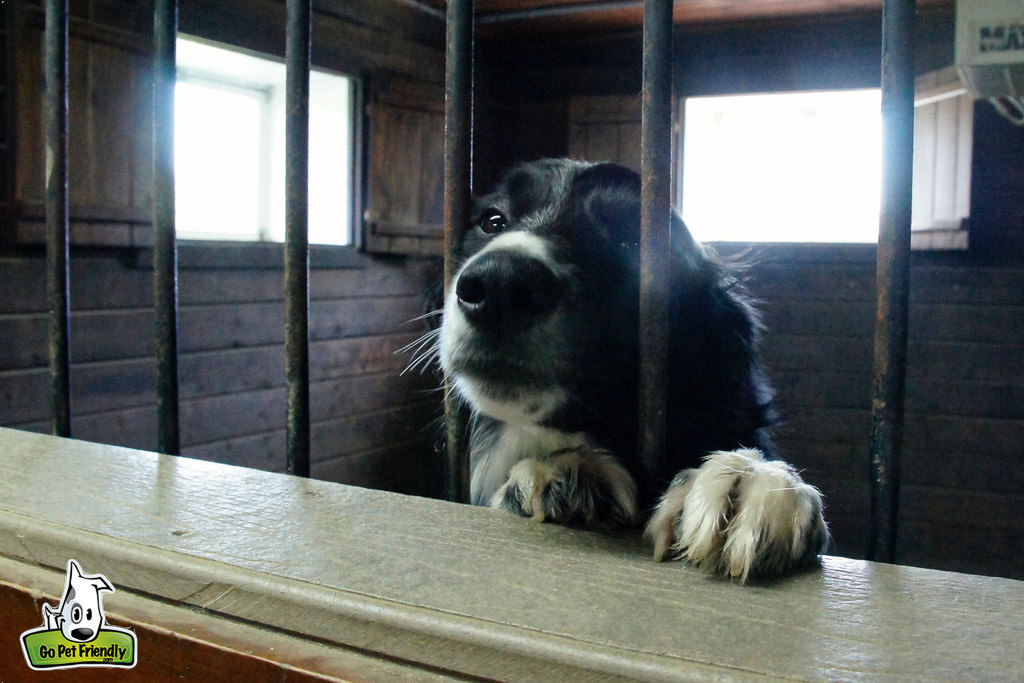 Dog looking through the gates of a kennel