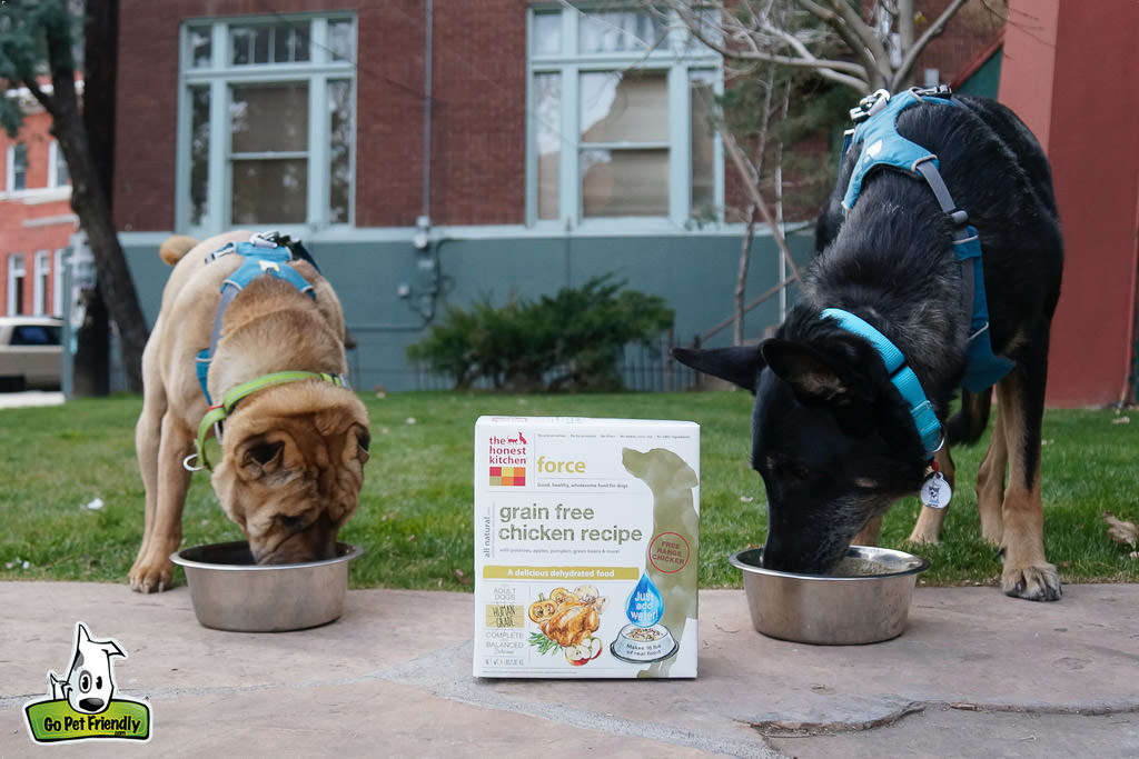 Two dogs eating dog food with bag in the middle