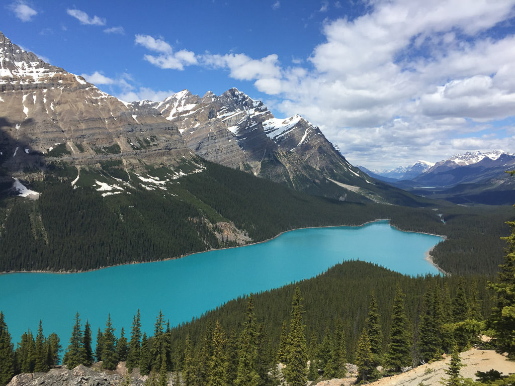 Aqua blue Peyto Lake at the base of the mountains with trees surrounding the lake.