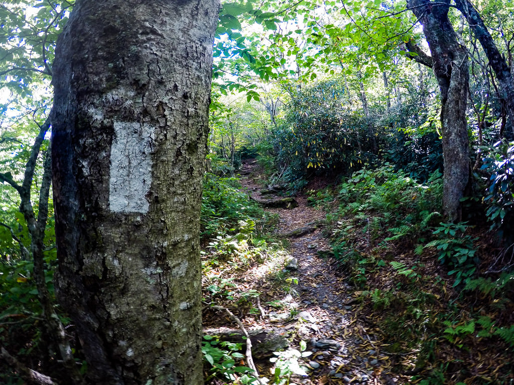 Tree with white rectangular marking along narrow trail through the trees.