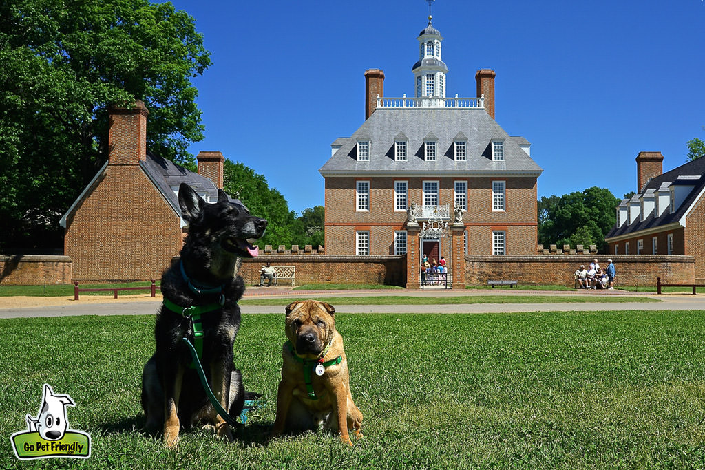 Two dogs sitting in front lawn of the Governor's Palace.