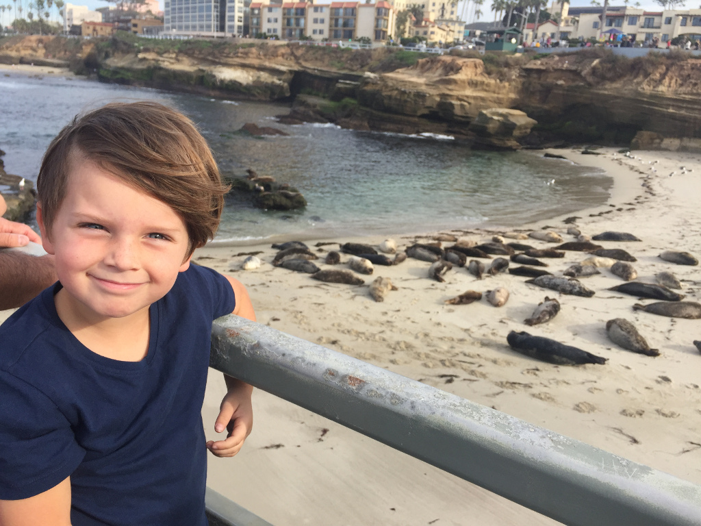Child with sea lions laying on the sand in the background