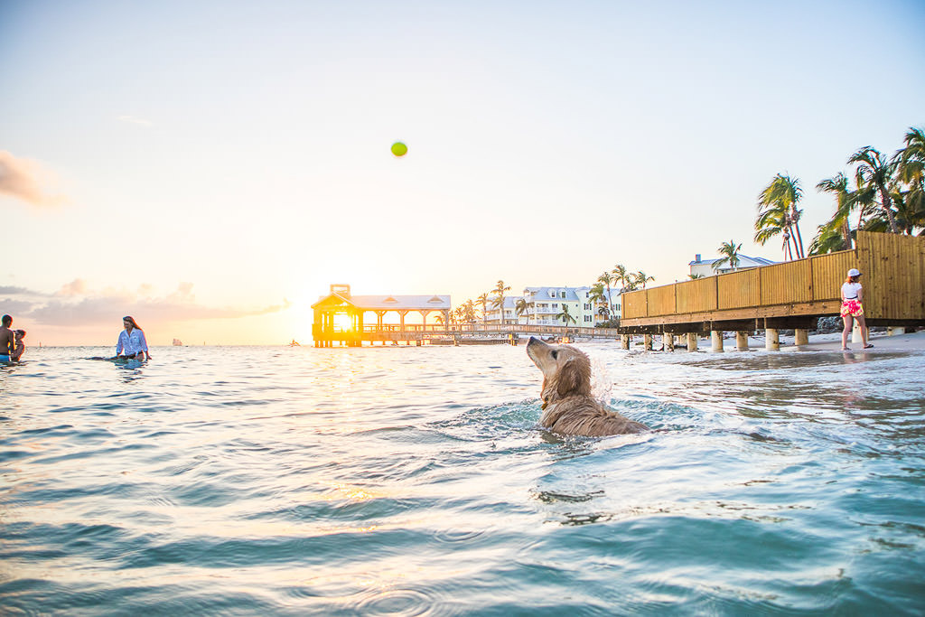 Dog in water catching ball as sun sets