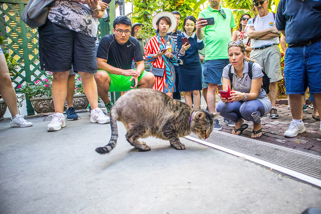 Group of people around a cat