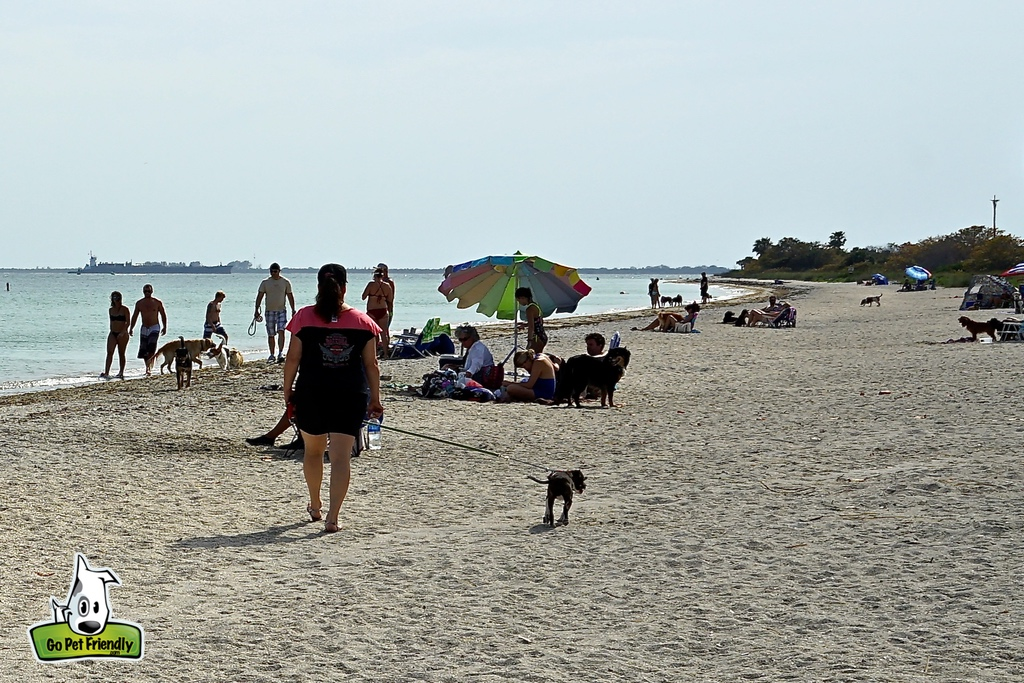 Owners and their pets along sandy beach