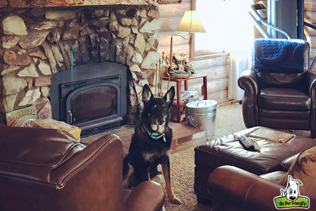 Buster in front of wood burning fireplace inside the cabin
