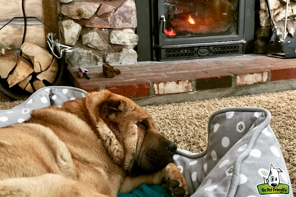 Ty laying in a dog bed in front of the wood burning fireplace in the cabin.