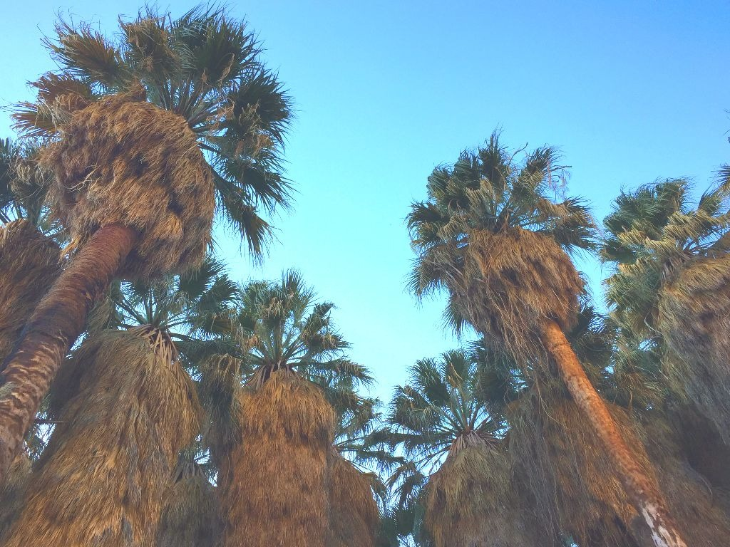 Palm trees with blue sky above