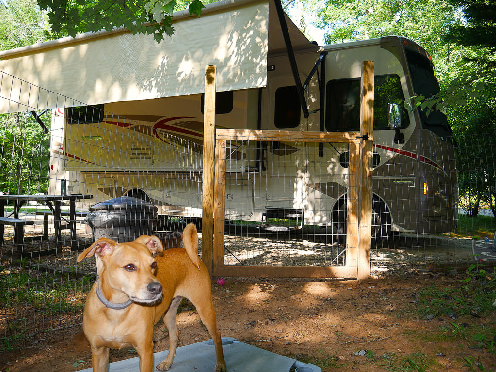 Winnebago Vista with Belle in a dog run right out front at campsite