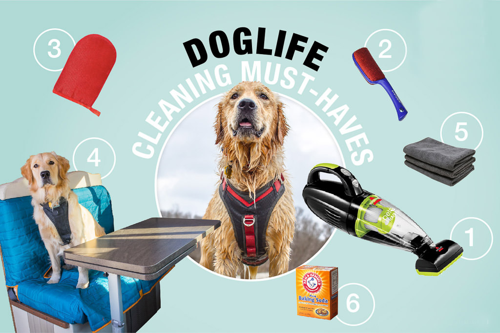 Graphic of Lucy the dog surrounded by various cleaning supplies