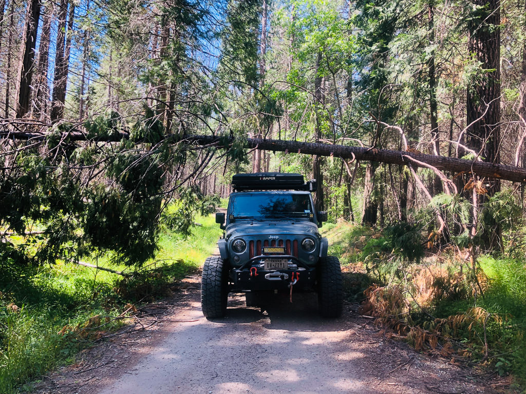 Jeep driving down gravel path passing underneath a fallen tree.